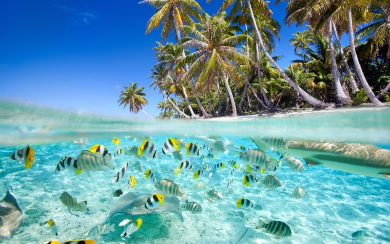 tropical-island-above-and-underwater-with-fishes-157055611_4300x3763